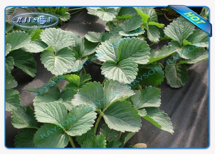high quality black cloth for weed control wholesale for root control bags