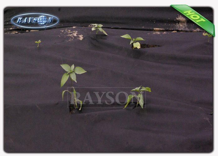 Chemical free and light weight 60gram pp non woven weed barrier fabric with UV treated