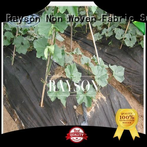 Rayson Non Woven Fabric diseases non woven polypropylene landscape fabric wholesale for seed blankets