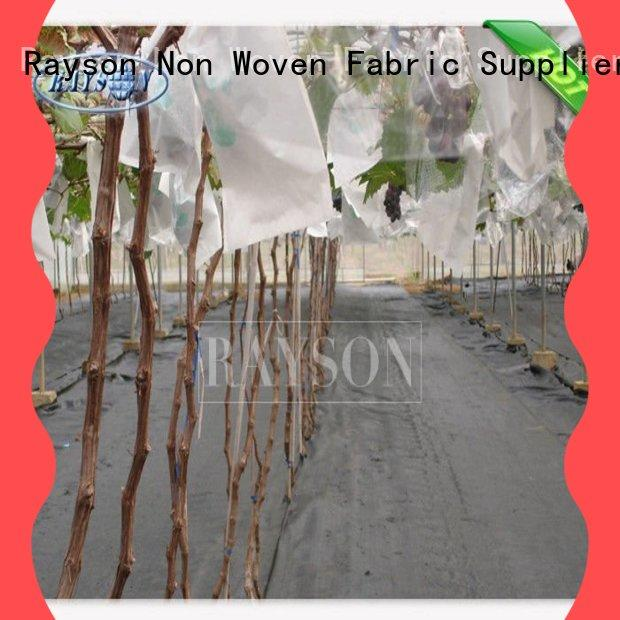 Rayson Non Woven Fabric growing fruit fly screen cover supplier for pear and vegetable
