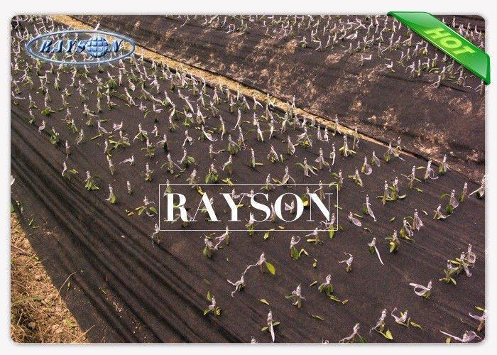 Spunbond Polypropylene Garden Weed Control Fabric , Non Woven Film 50gram Thickness