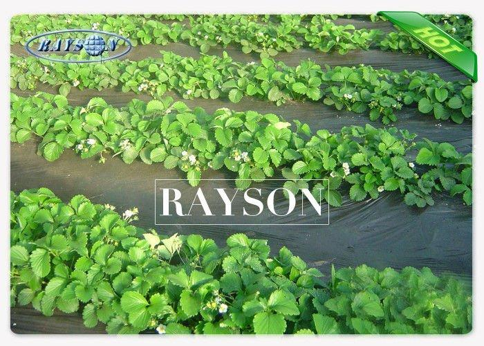 Oganic / Biodegradable Nonwoven Garden Weed Control Fabric Anti UV