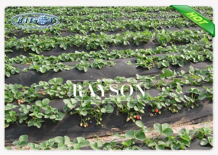 Nonwoven White Weed Control Fabric , Weed Stop PPSB Non Woven Fabric For Garden / Farm
